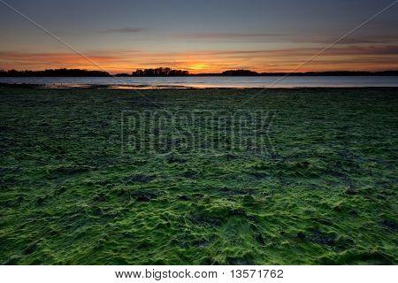 Low Tide In Sea Coast