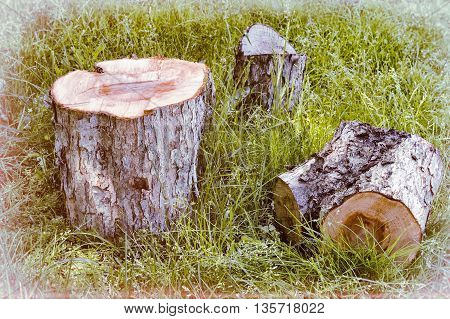 Among the green grass are part of a sawn tree trunk..