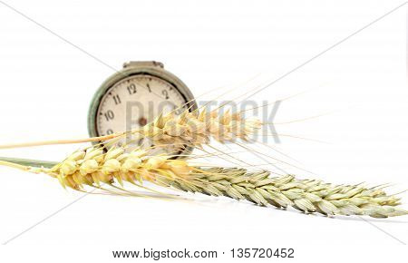 Picture of a Horizontal wheat ripe and unripe ears in front of vintage pocket watch