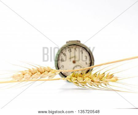 Picture of a Horizontal wheat ears in front of vintage pocket watch