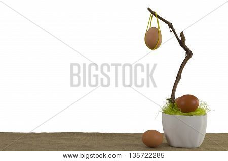 Plant in flowerpot and Eggs Isolated on White Background