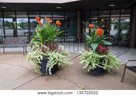 SHOREWOOD, ILLINOIS / UNITED STATES - AUGUST 30, 2015: Orange canna flowers bloom in pots on the sidewalk of Shorewood's Apple Tree Plaza.