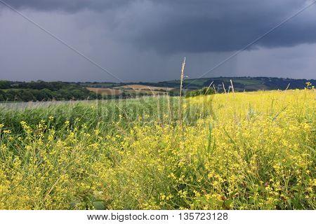 Storm clouds over a rape field by Slapton Ley, Devon