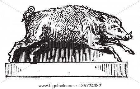 Boar, vintage engraved illustration. Magasin Pittoresque 1852.