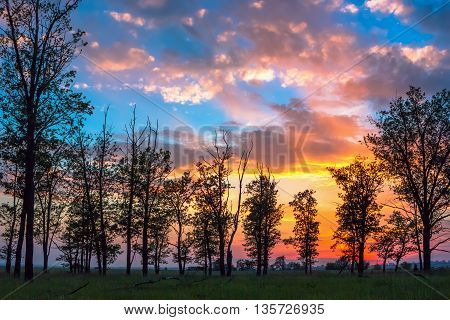 Silhouettes of trees on the background fantastic colorful sky with cumulus clouds at sunset.