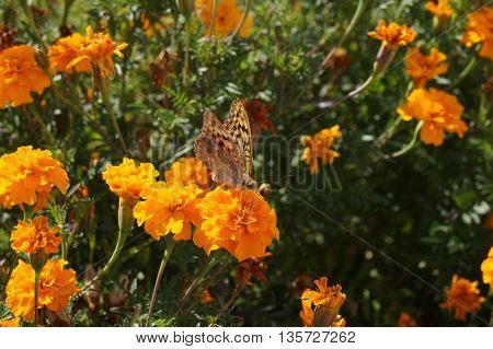 Garden of flowers and a butterfly with same color