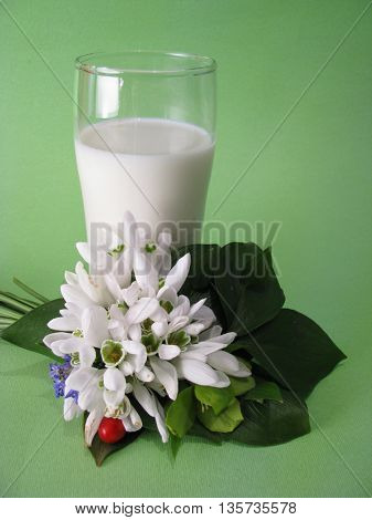 milk and spring flower