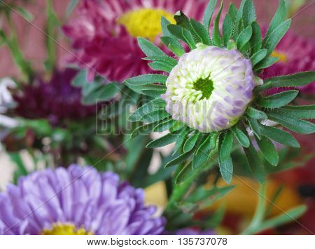 Beautiful fresh colorful flowers