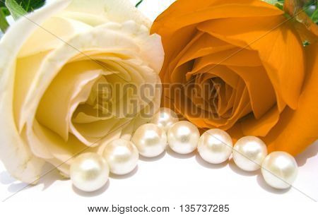 Two beautiful roses with pearls on white background