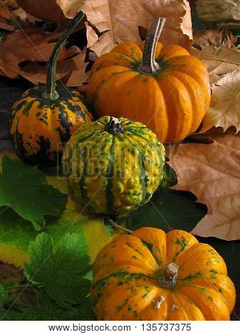 Colorful pumpkins on dry autumn leaves