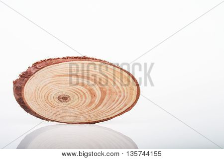 A small piece of chopped wood branch.