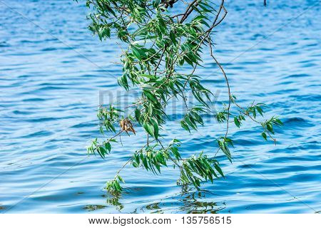 Willow Over The Water