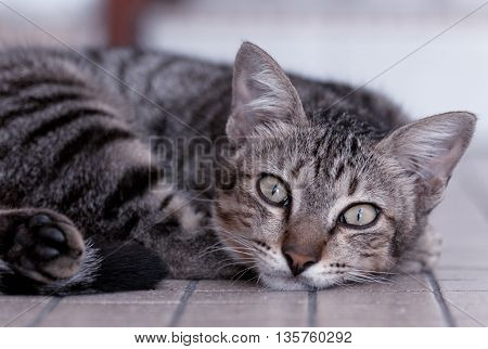 A cute cat starring with sharp eyes.