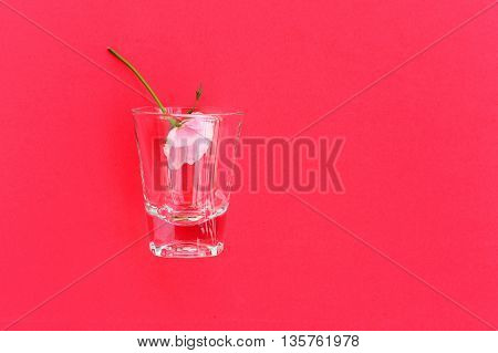pink rose in shot glass on red background