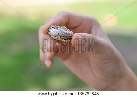 Hand holding boiled peanuts, nut seed, fruit
