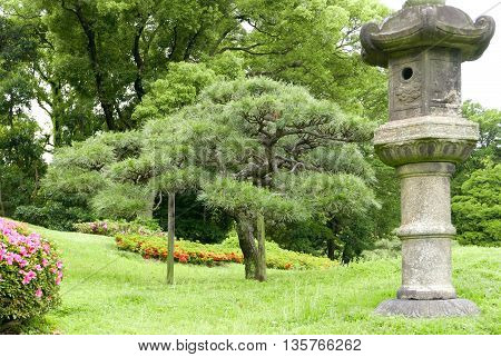 Japanese Outdoor Park Stone Decoration And Pine Trees