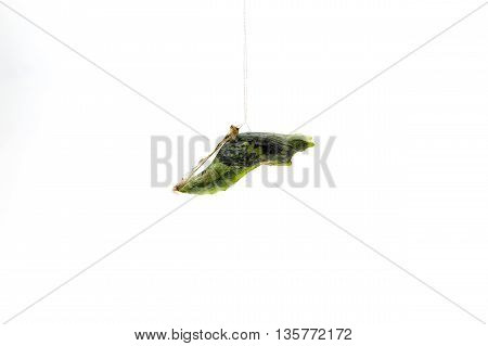 Chrysalis butterfly larvae isolated on white background.