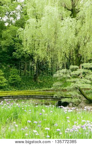 Vertical Green Trees, Bridge, Flowers In Park