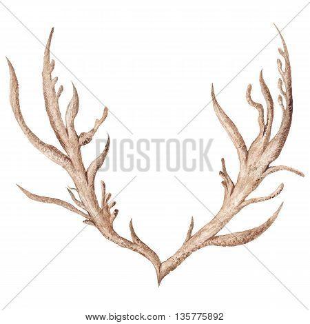 Creative tribal boho style horn illustration isolated on white background