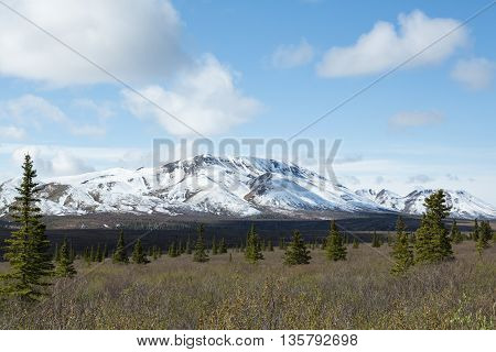 The forests and mountains of Alaska's Denali National Park