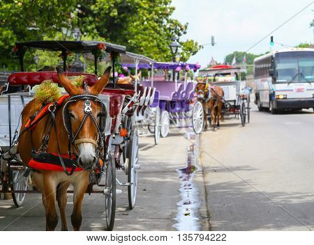 NEW ORLEANS, USA - MAY 14, 2015: Carriages waiting for passengers in French Quarter in the back a bus is approaching.