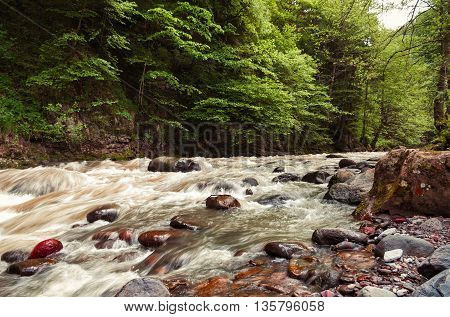 Beautiful Georgian landscape in summer.River in forest. Georgia Caucasus