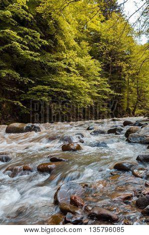 Beautiful Georgian landscape in summer.River in forest. Georgia Caucasus