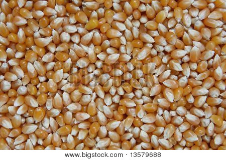 A background made up of unpopped popcorn kernels