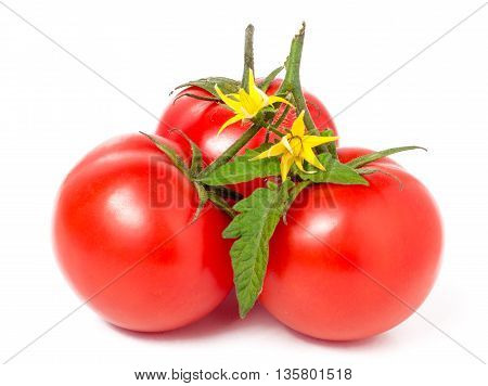 Three tomatoes with leaves and yellow flower isolated on white background