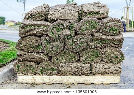 Stack of turf grass rolls for a lawn piled on wooden pallet.