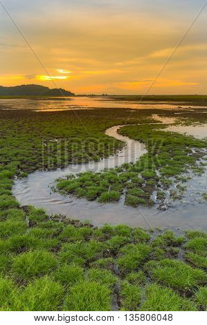 Small water way over little grass on crack land with sunset sky background