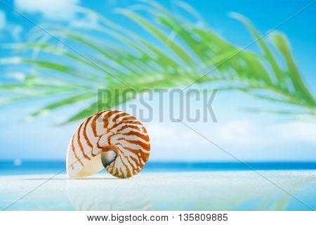 nautilus shell on wet white glass with reflection, shallow dof