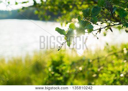 Summer landscape with tree, lake and sunshine