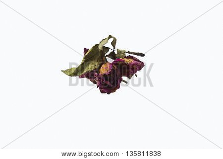 Dry roses placed on a white background
