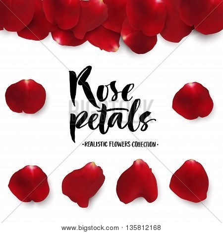 Realistic red rose petals set. Six different objects editable shadow on white background.