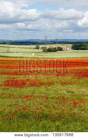 KIRKBY-IN-ASHFIELD ENGLAND - JUNE 24: Red poppies in farmland fields pylons and farmhouse in distance. In Kirkby-In-Ashfield Nottinghamshire England. On June 24th 2016.