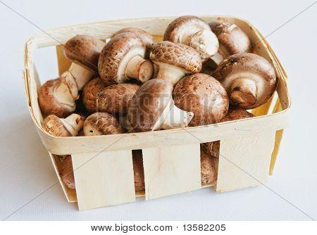 Mushrooms (champignons)