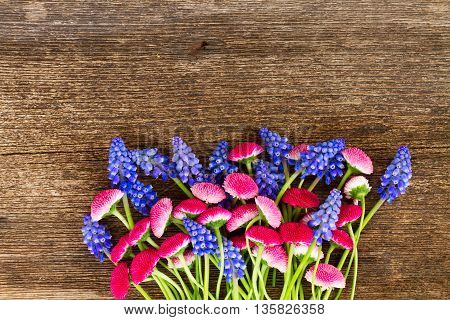 Blue Muscari and Pink Daisy Flowers border on wooden table
