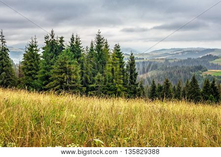 Large Meadow With Herbs,  Trees In Mountain Area