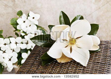 Magnolia And Dogwood Still Life