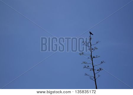 A black bird perched on top of a isolated tree.
