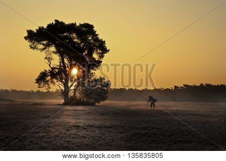 Professional Photographer and Tree Silhouette during sunrise