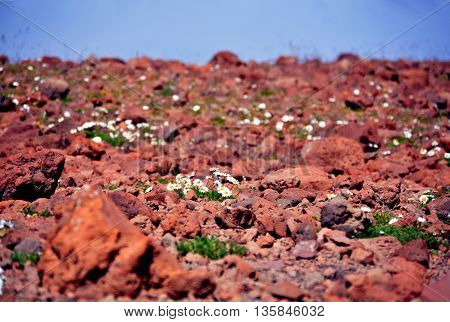 Background of white flowers and red stone in mountain