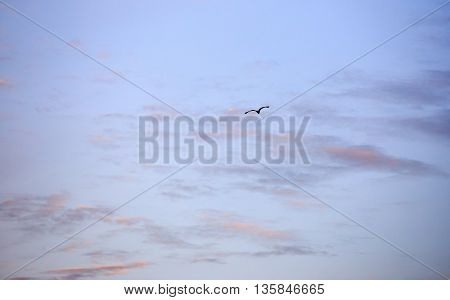 Bird flying into the sunrise with vivid sky and clouds.