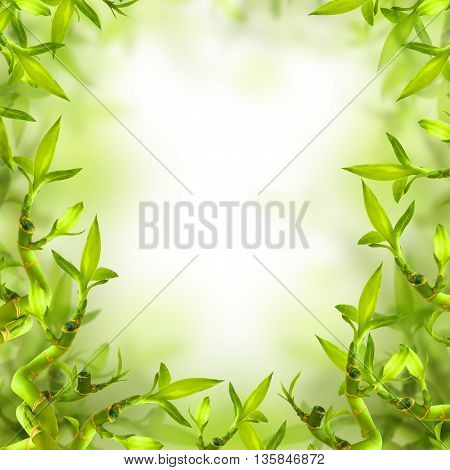 Feng Shui Background of Green Bamboo Leaves