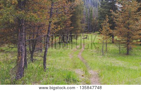 Landscape image of hiking trail in the wilderness.