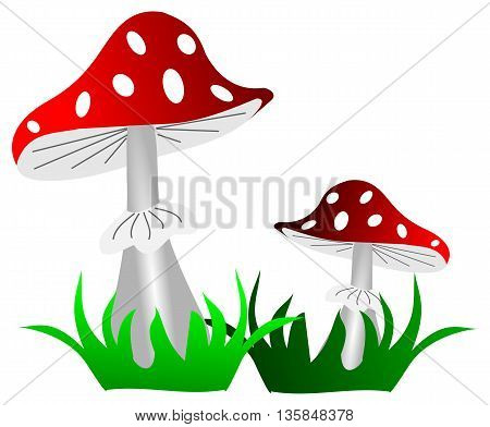 toadstool red mushrooms in the grass on white background