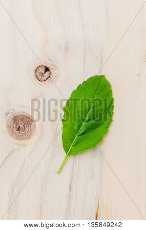 Alternative Medicine Fresh Holy Basil Leaves On Wooden Background. Rama Tulsi. Holy Basil  The Queen