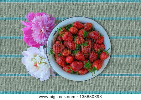 Garden strawberry in a old boil with peonies