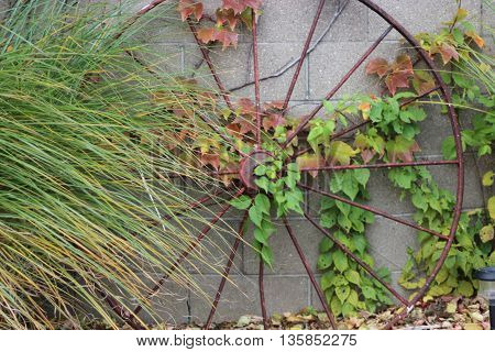 Old wagon wheel leaning on brick wall with colorful ivy and long grass